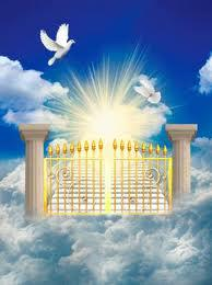 Heaven S Gate Dogs Home