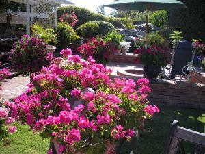 backyard-2012 002