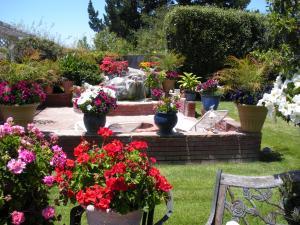backyard2011 002