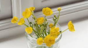 weeds n jelly jar