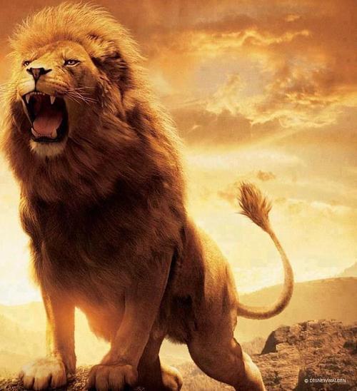 Lion-feel-free-32308434-500-548
